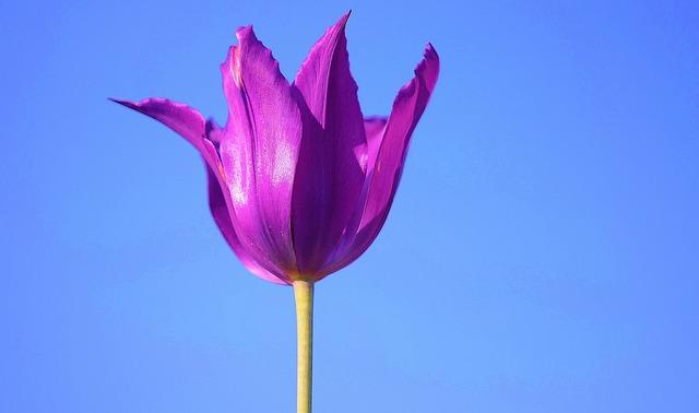 Flower, Plant, Blossom, Nature, Lilac, Purple, Bloom