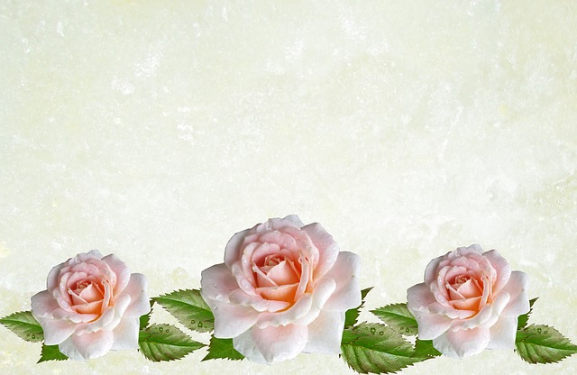 Rose, Flower, Love, Wedding, Desktop