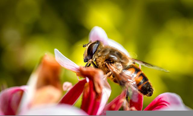 Bee, Macro, Insect, Pollen, Flower, Nature, Nectar