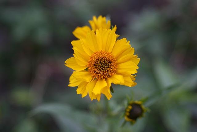 Macro, Flower, Spring Flower, Macro Photography, Nature
