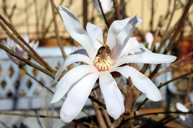 Magnolia, Flower, Insect, Nature, Plant