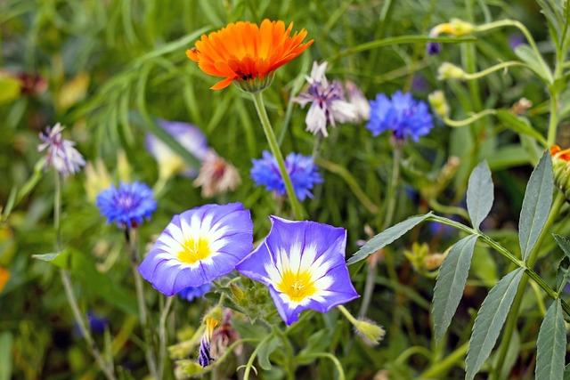 Flower Meadow, Pointed Flower, Meadow, Wild Flower