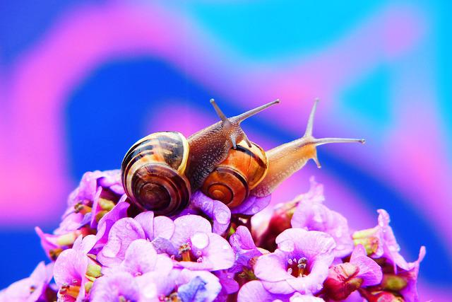 Wstężyki Gajowe, Molluscs, Flower, Posts, The Petals