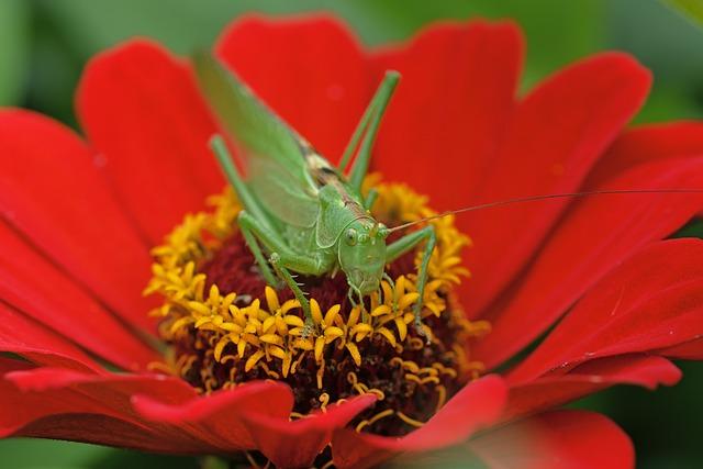Grasshopper, Insect, Flower, Mantodea, Nature, Animal