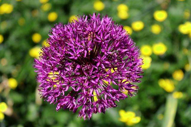 Blossom, Bloom, Nature, Flower, Starlight-lauch