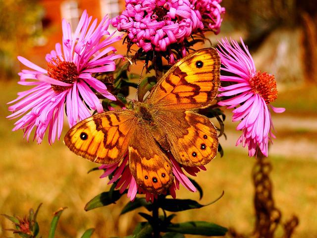 Nature, Insect, Flower, Butterfly Day, Plant, Krs