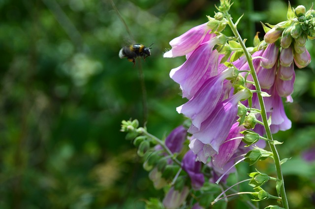 Nature, Flower, Insect, Hummel, Wild Flower, Bee