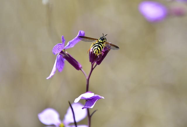 Insect, Nature, Outdoors, Flower