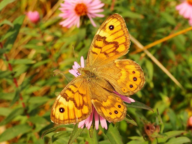 Nature, Butterfly Day, Insect, Flower, Summer