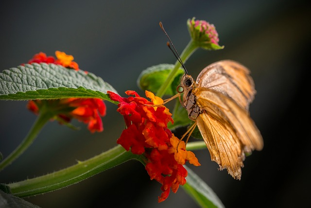 Kalanchoe, Flower, Butterfly, Insect, Nature, Macro