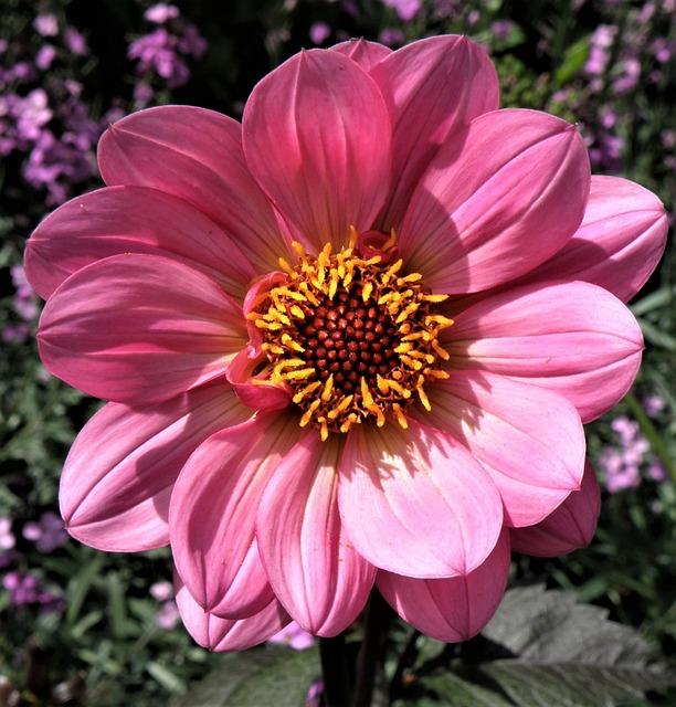 Flower, Nature, Flora, Garden, Summer, Petal, Blooming