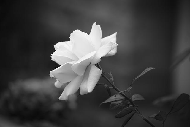 Nature, Flower, Plant, Leaf, No Person, Outdoor, Petal