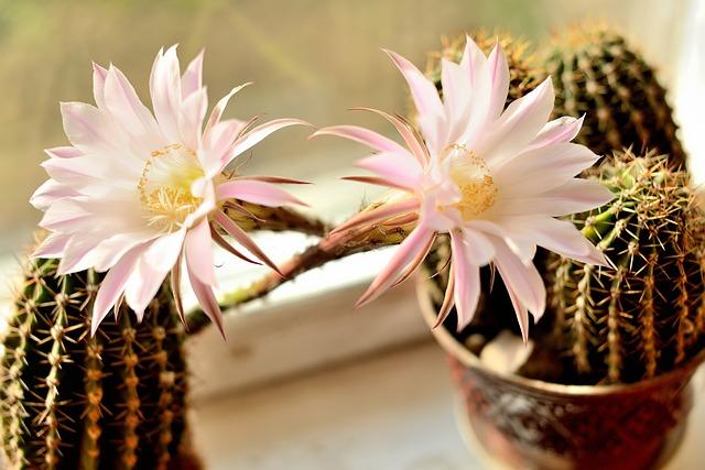 Flower, Nature, Cactus, Plant