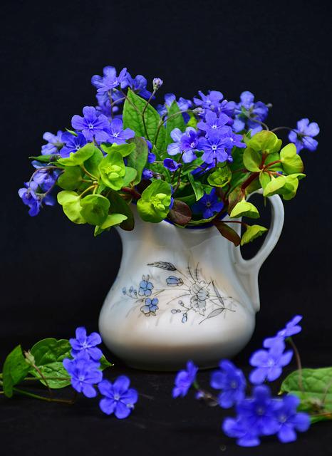 Flower, Plant, Nature, Leaf, Forget Me Not, Spring