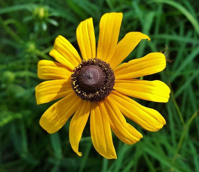 Flower, Yellow Flower, Wildflowers, Spring, Nature