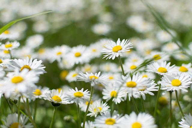 Nature, Plant, Flower, Summer, Field, Faye, Flowers