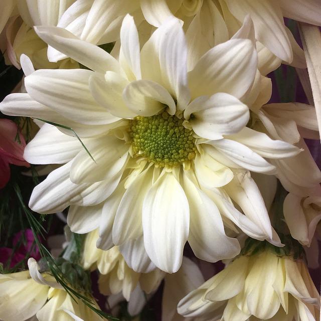 White Flower, Stamens, Flower, Petals, Nature, White