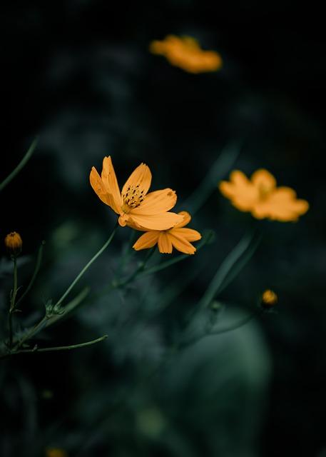 Sri Lanka, Flower, Yellow, Nature, Garden, Plant