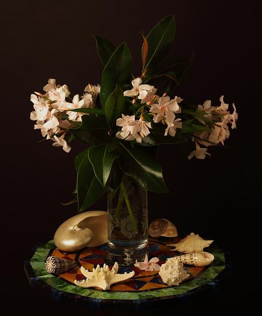 Oleander, Flower, Still Life