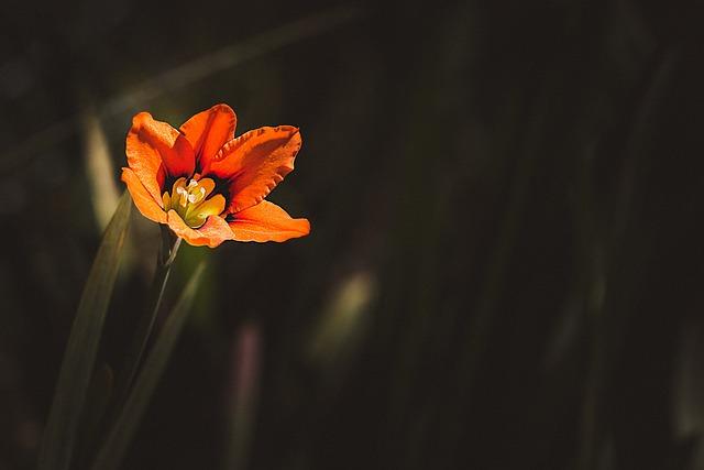 Flower, Orange, Orange Flower, Small Flower, Small