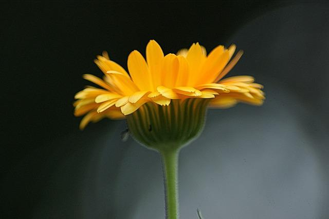 Flower, Orange, Blossom, Bloom, Orange Flowers, Close