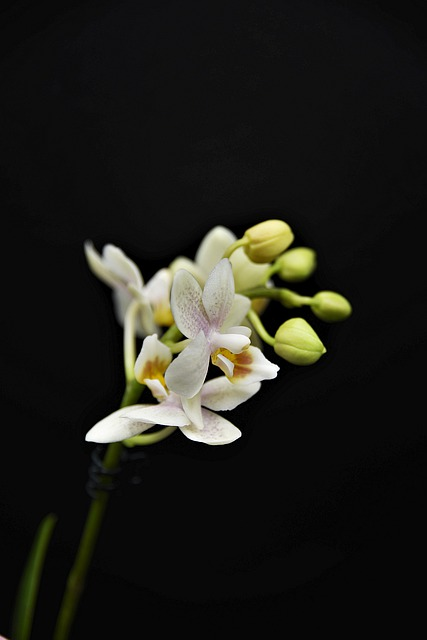 Orchid, Blossom, Bloom, Flower, Close Up, Plant