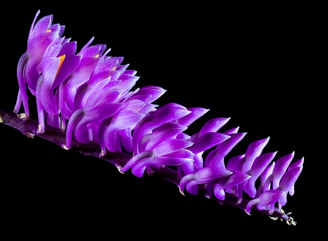 Wild Orchid, Orchid, Blossom, Bloom, Flower, Purple