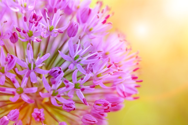 Allium, Leek, Flower, Ornamental Onion, Onion Plant