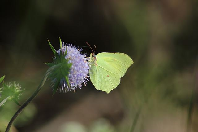 Nature, Insect, Butterfly, Outdoors, Wing, Flower