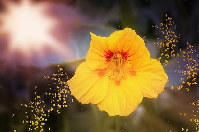 Painting, Flower, Nasturtium, Cress, Painted, Yellow
