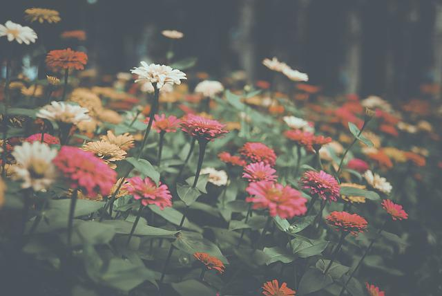Flower, Garden, Nature, Summer, Plant, Park, Outdoors