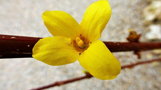 Nature, Flower, Plant, Outdoor, Branch, Yellow, Petal