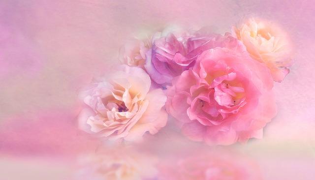 Flower, Floral, Nature, Petal, Roses, Blossom, Bloom