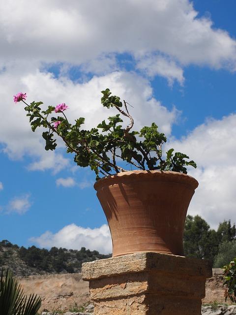 Geranium, Blossom, Bloom, Flower, Pink