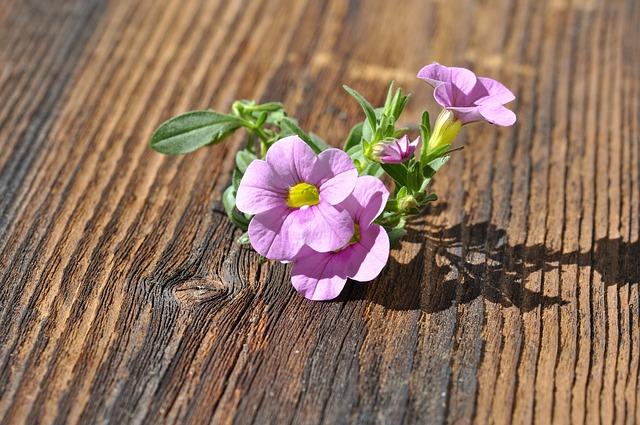 Zauberglockchen, Flower, Blossom, Bloom, Pink, Plant