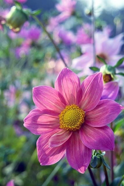 Flower, Red, Pink, Nature, Petals, Pistil