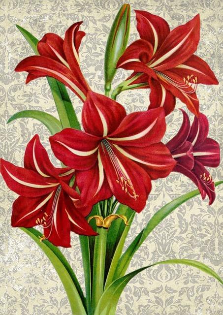 Flower, Amaryllis, Red, Green, Botany, Botanical, Plant