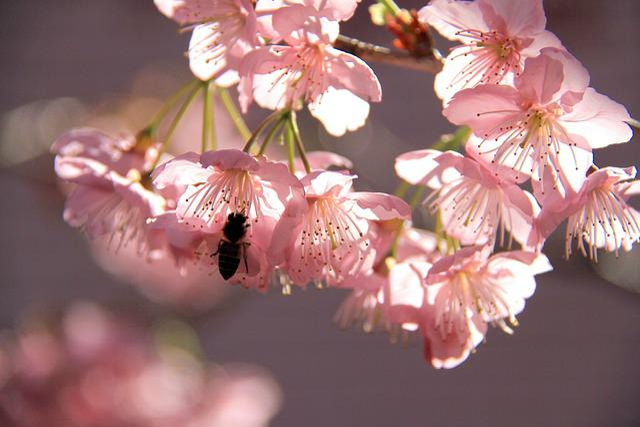 Flower, Plant, Branch, Garden, Cherry Tree, Pink