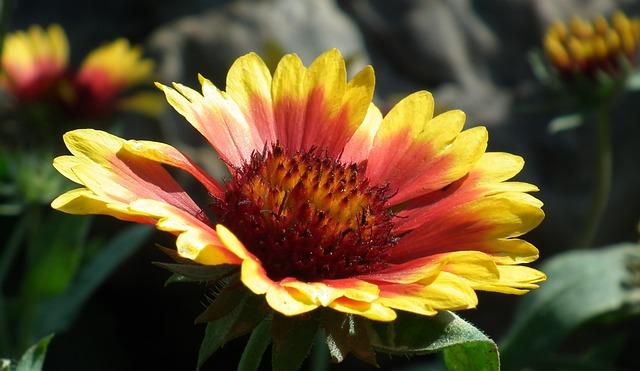 Nature, Flower, Plant, Garden, Summer