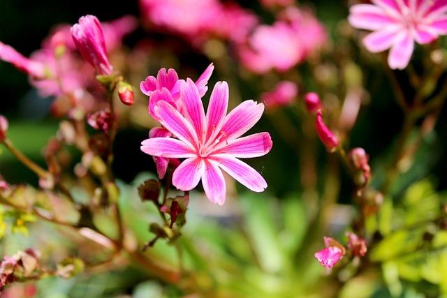 Flower, Red, Nature, Blossom, Bloom, Garden, Plant