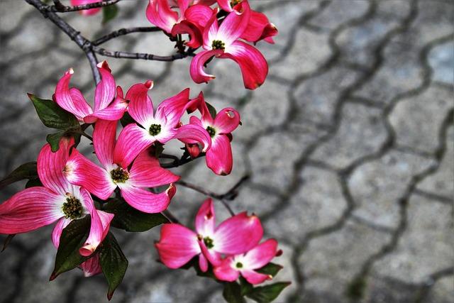 Flower, Nature, Plant, Garden, Spring, Closeup, Season