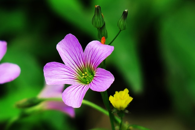 Nature, Leaf, Outdoor, Flower, Plant, Garden, Petal
