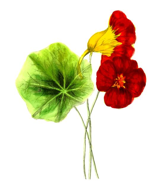 Floral, Flower, Leaf, Leafy, Leaves, Nasturtium, Plant