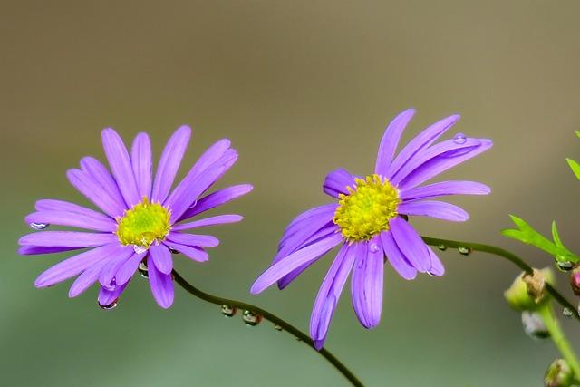 Malan, Plant, Botanical Garden, Nature, Flower