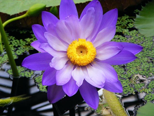 Flower, Nature, Garden, Plant, Blossom, Petals, Flora