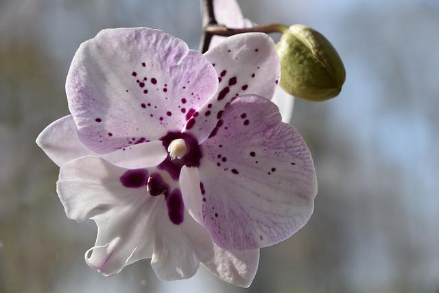 Flower, Nature, Plant, Fulfillment, Petal, Orchid, Bud