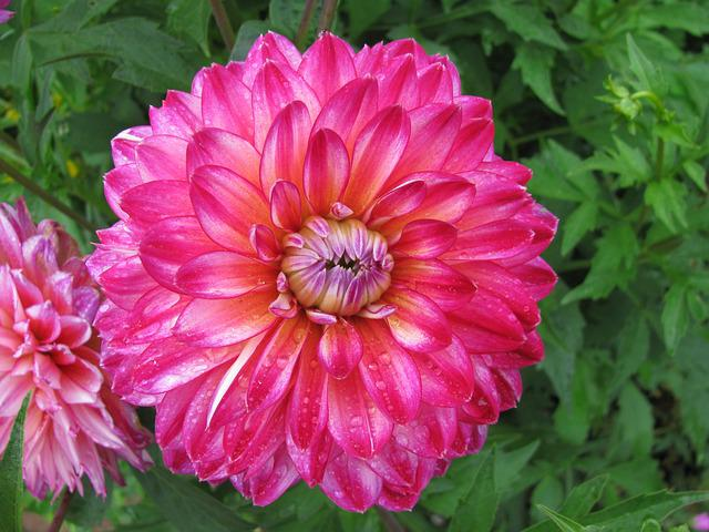 Flower, Garden, Plant, Nature, Summer, Floral