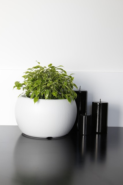 Flower, Flower Pot, Pots, Candle, Decor, Style