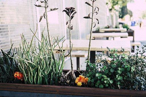 Flowers, Plants, Flower Pot