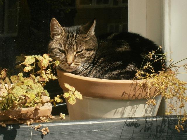 Cat, Pet, Flower Pot, Relax, Outdoor
